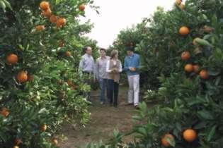Los Aparici-Colmenar pasean entre los naranjos.