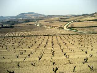 Vista de los viñedos de Luis Cañas.